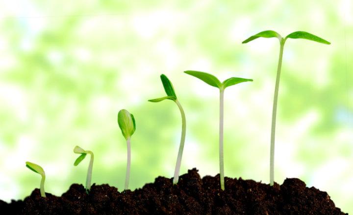 hay-que-aprender-a-crecer